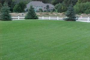 After treatment by Green Earth Lawn Care
