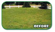 Before Green Earth Lawncare treatment