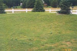 Before treatment by Green Earth Lawn Care